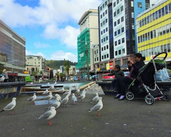 Pigeons in Wellington