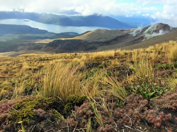 Vistas from Tongariro
